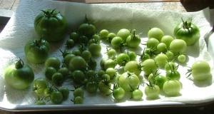 MorePie's tomato crop, September 26, 2012
