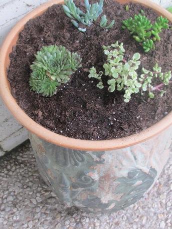 DMP planted a little succulent garden.